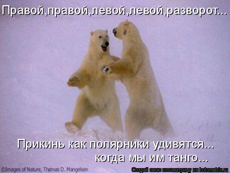 Котоматрица: Правой,правой,левой,левой,разворот... Прикинь как полярники удивятся... когда мы им танго...