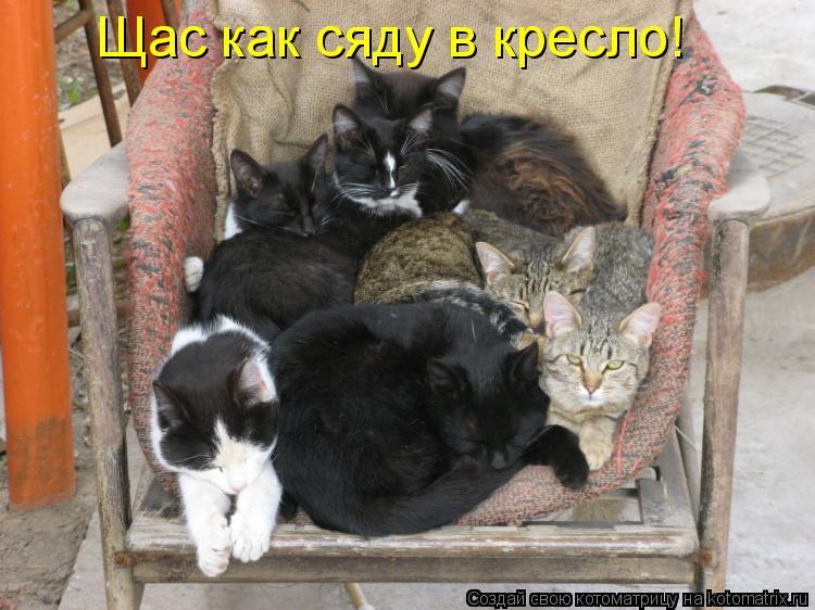 Котоматрица: Щас как сяду в кресло!