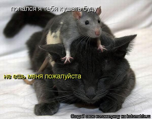 Котоматрица: попался я тебя кушать буду не ешь меня пожалуйста не ешь меня пожалуйста