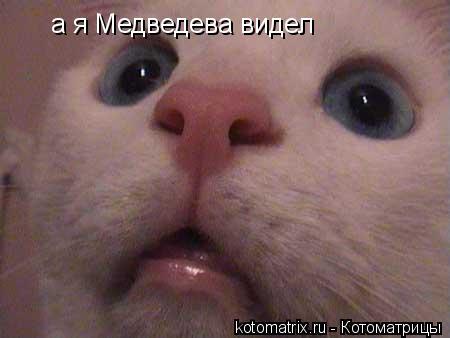 Котоматрица: а я Медведева видел