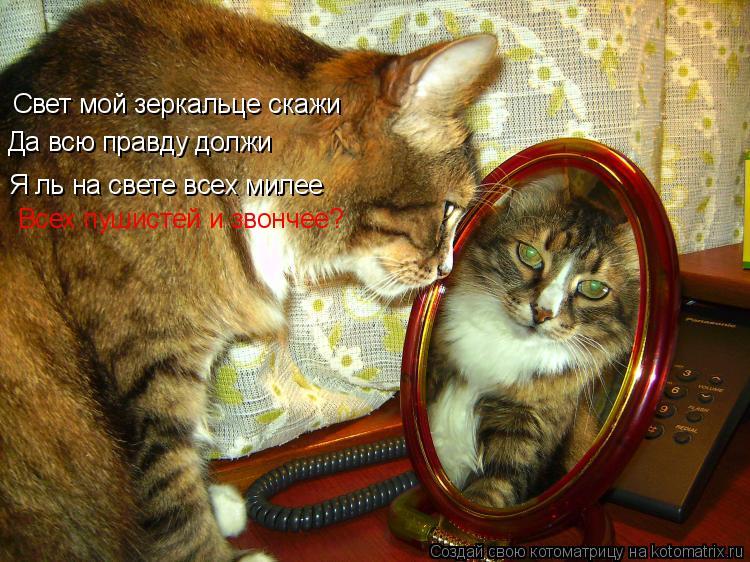 Котоматрица: Свет мой зеркальце скажи Да всю правду должи Я ль на свете всех милее Всех пушистей и звончее?