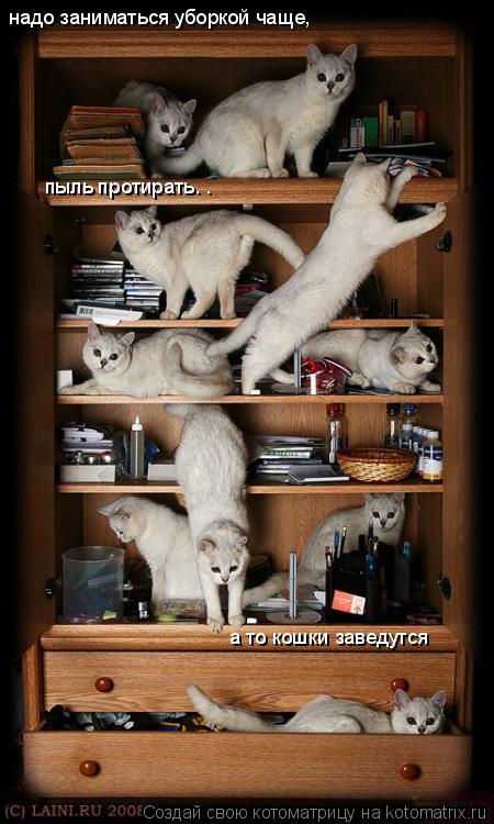 Котоматрица: надо заниматься уборкой чаще,пыль протирать. .а то кошки заведутся надо заниматься уборкой чаще, пыль протирать. . а то кошки заведутся
