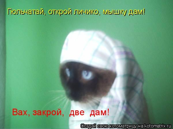 Котоматрица: Гюльчатай, открой личико, мышку дам! Вах, закрой,  две  дам!