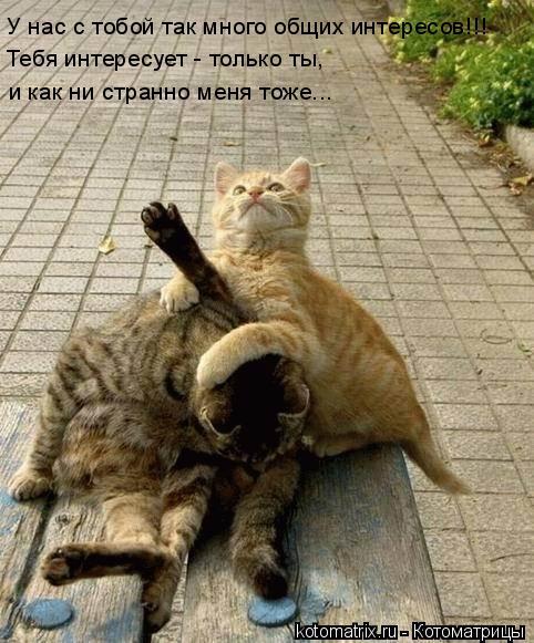 Котоматрица: У нас с тобой так много общих интересов!!! Тебя интересует - только ты,  и как ни странно меня тоже...