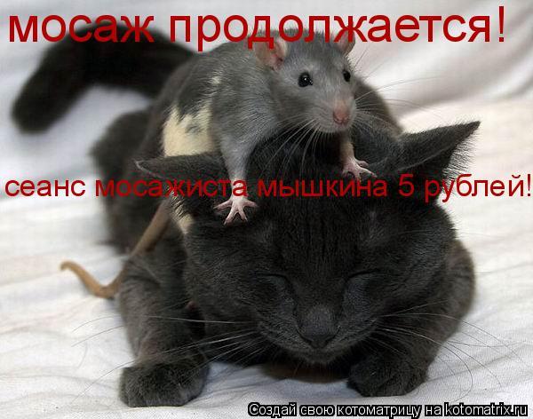 Котоматрица: мосаж продолжается! сеанс мосажиста мышкина 5 рублей!