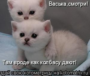 Котоматрица: Васька,смотри! Там вроде как колбасу дают!