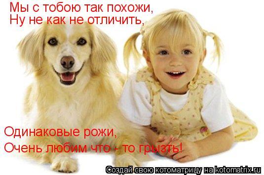 Котоматрица: Мы с тобою так похожи, Ну не как не отличить, Одинаковые рожи, Очень любим что - то грызть!