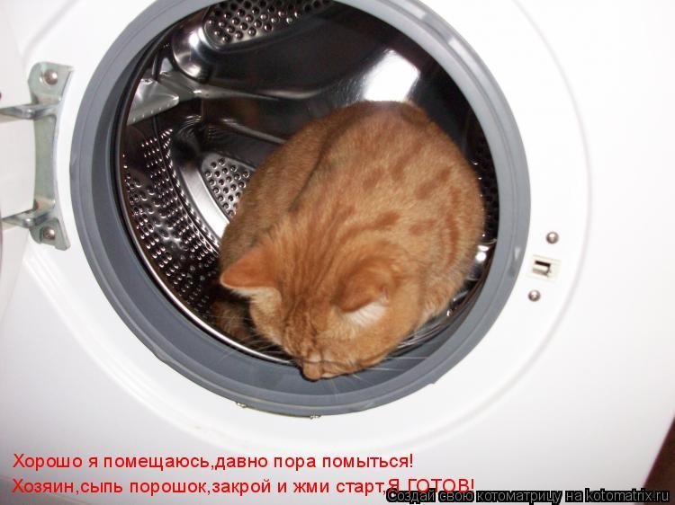 Котоматрица: Хорошо я помещаюсь,давно пора помыться! Хозяин,сыпь порошок,закрой и жми старт,Я ГОТОВ!