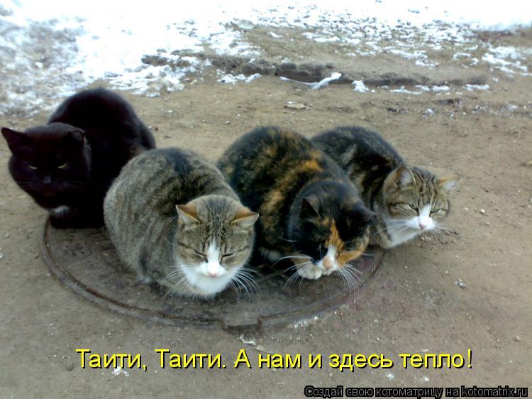 Котоматрица: Таити, Таити. А нам и здесь тепло!