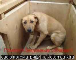 Котоматрица: Помогите бездомным собакам!!!