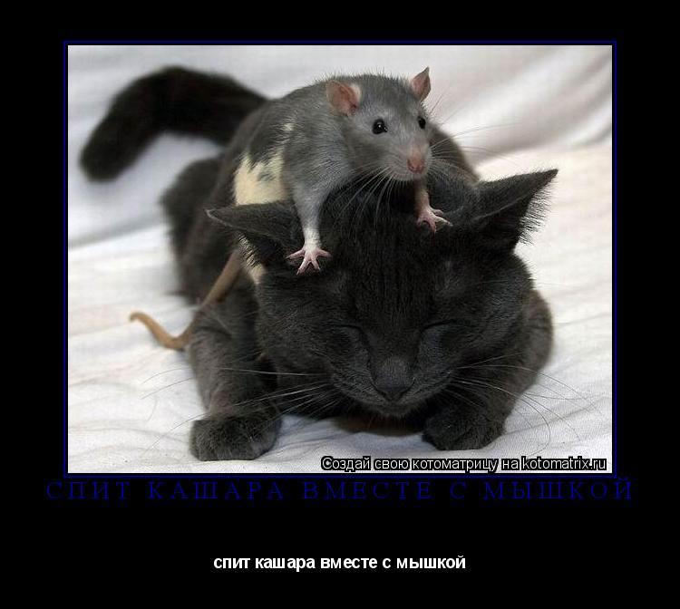 Котоматрица: спит кашара вместе с мышкой спит кашара вместе с мышкой