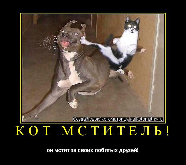 Котоматрица: кот мститель! он мстит за своих побитых друзей!