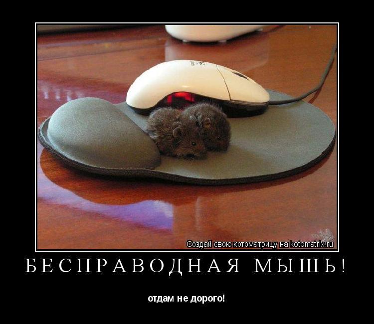 Котоматрица: бесправодная мышь! отдам не дорого!