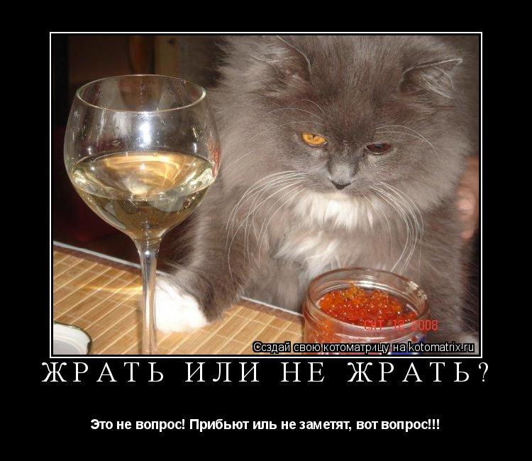 Котоматрица: Жрать или не жрать? Это не вопрос! Прибьют иль не заметят, вот вопрос!!!