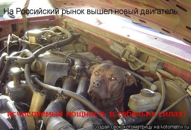 Котоматрица: На Российский рынок вышел новый двигатель, исчисляемый мощность в собачьих силах!