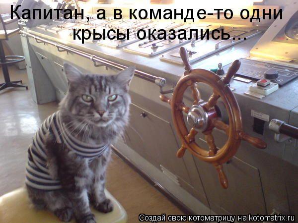 Котоматрица: Капитан, а в команде-то одни крысы оказались...