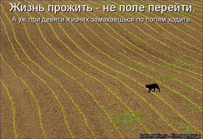 Котоматрица: Жизнь прожить - не поле перейти. А уж при девяти жизнях замахаешься по полям ходить.