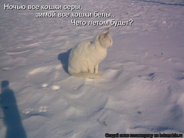 Котоматрица: Ночью все кошки серы, зимой все кошки белы.. Чего летом будет?
