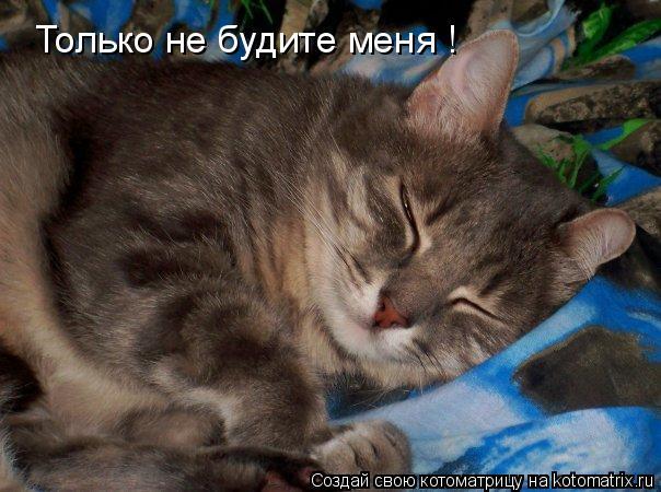 Котоматрица: Только не будите меня !