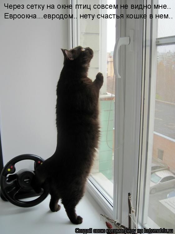 Котоматрица: Через сетку на окне птиц совсем не видно мне.. Евроокна...евродом.. нету счастья кошке в нем..