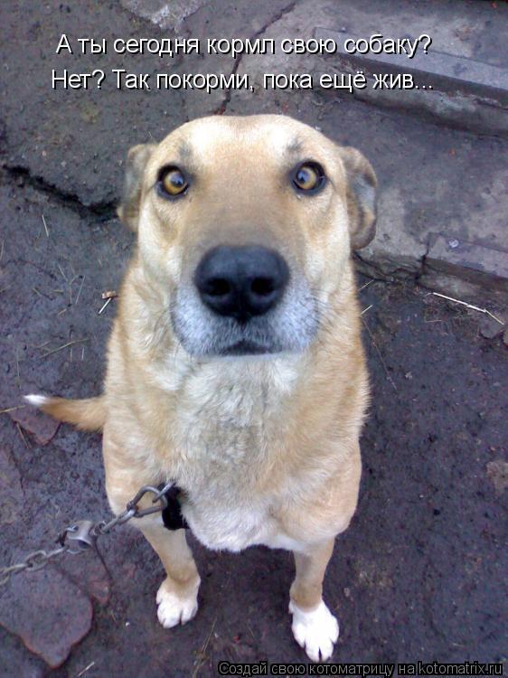 Котоматрица: А ты сегодня кормл свою собаку? Нет? Так покорми, пока ещё жив...