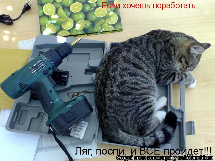 Котоматрица: Если хочешь поработать Ляг, поспи, и ВСЕ пройдет!!!