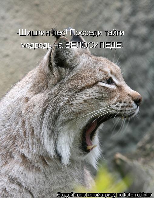 Котоматрица: медведь на ВЕЛОСИПЕДЕ! -Шишкин лес! Посреди тайги