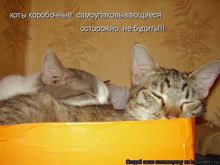 Котоматрица: коты коробочные, самоупаковывающиеся  осторожно, не будить!!!