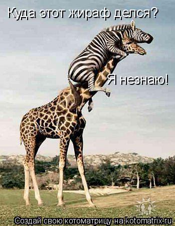 Котоматрица: Куда этот жираф делся? Я незнаю!