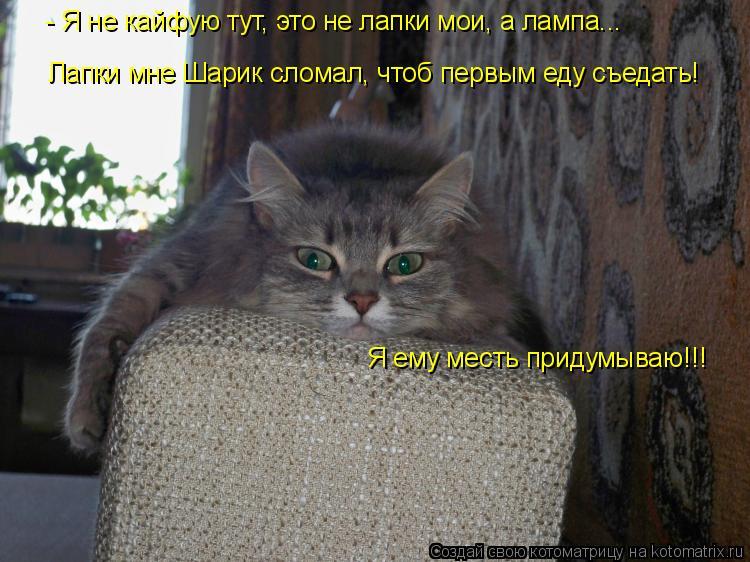 Котоматрица: Я ему месть придумываю!!! - Я не кайфую тут, это не лапки мои, а лампа... Лапки мне Шарик сломал, чтоб первым еду съедать!