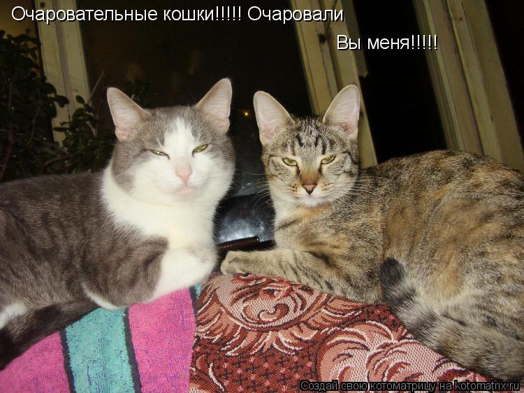Котоматрица: Очаровательные кошки!!!!! Очаровали  Вы меня!!!!!