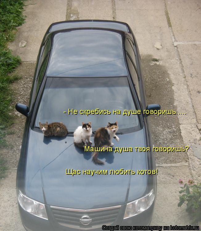Котоматрица: - Не скребись на душе говоришь..... Машина душа твоя говоришь? Щас научим любить котов!