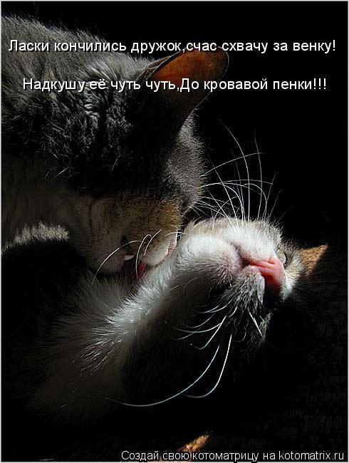 Котоматрица: Ласки кончились дружок,счас схвачу за венку! Надкушу её чуть чуть,До кровавой пенки!!!