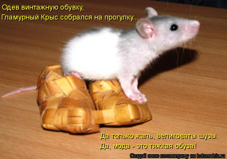Котоматрица: Одев винтажную обувку,  Гламурный Крыс собрался на прогулку...  Да только жаль, великоваты шузы.  Да, мода - это тяжкая обуза!