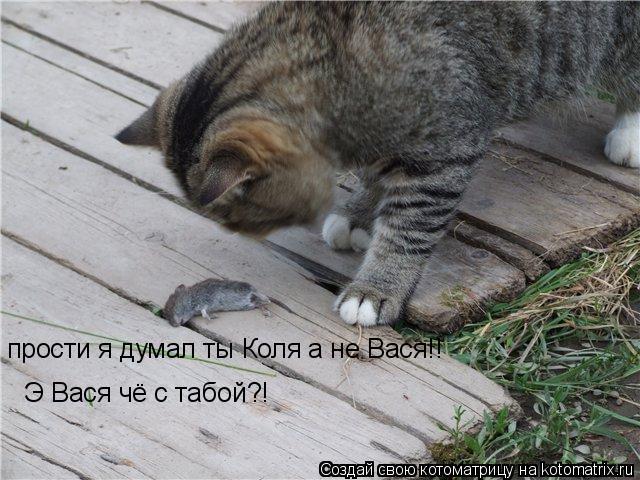 Котоматрица: прости я думал ты Коля а не Вася!! Э Вася чё с табой?!