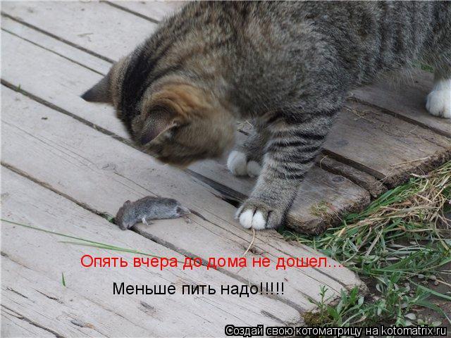 Котоматрица: Опять вчера до дома не дошел.... Меньше пить надо!!!!!