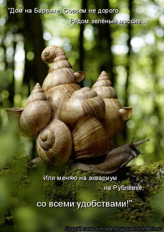 """Котоматрица: """"Дом на Барвихе. Совсем не дорого Рядом зелёный массив... Или меняю на аквариум  на Рублёвке,  со всеми удобствами!"""""""