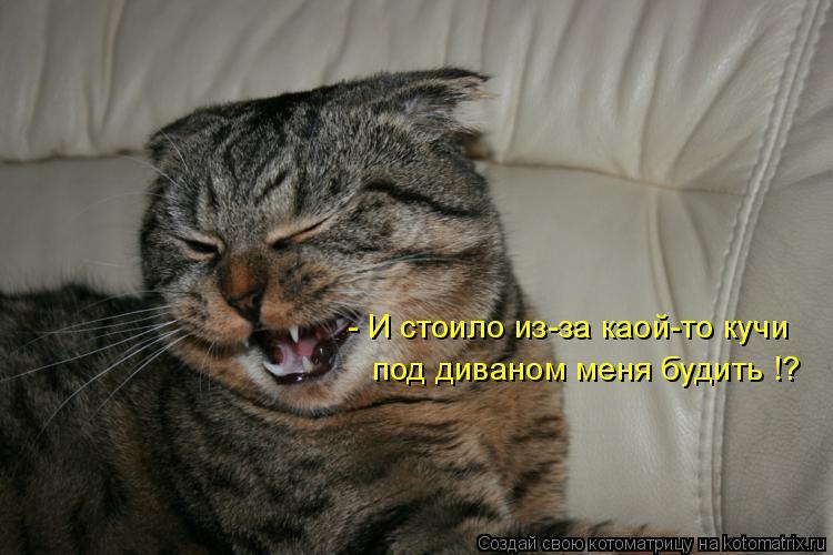 Котоматрица: - И стоило из-за каой-то кучи  под диваном меня будить !?