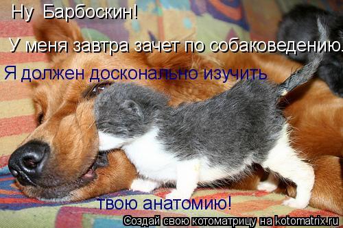 Котоматрица: Ну  Барбоскин!   У меня завтра зачет по собаковедению. Я должен досконально изучить твою анатомию!
