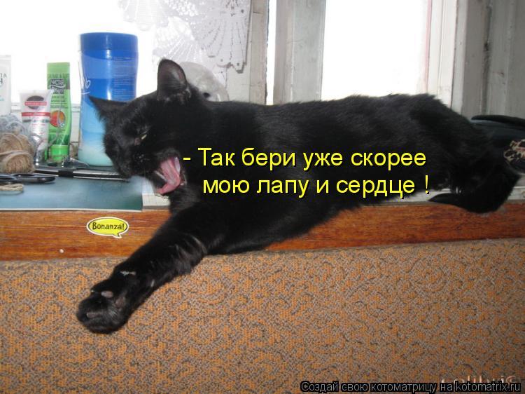 Котоматрица: - Так бери уже скорее  мою лапу и сердце !