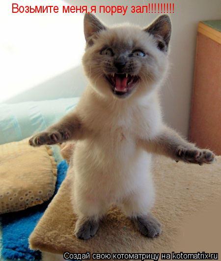 Котоматрица: Возьмите меня,я порву зал!!!!!!!!!