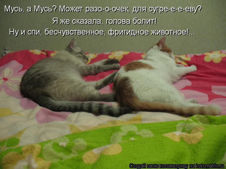 Котоматрица: Мусь, а Мусь? Может разо-о-очек, для сугре-е-е-еву? Я же сказала, голова болит! Ну и спи,  Ну и спи, бесчувственное, фригидное животное!...