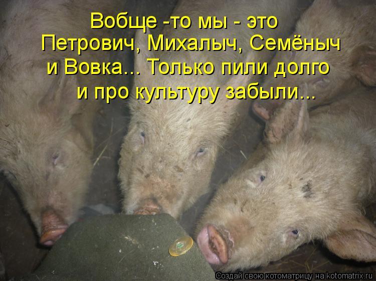 Котоматрица: Вобще -то мы - это Петрович, Михалыч, Семёныч  и Вовка... Только пили долго и про культуру забыли...