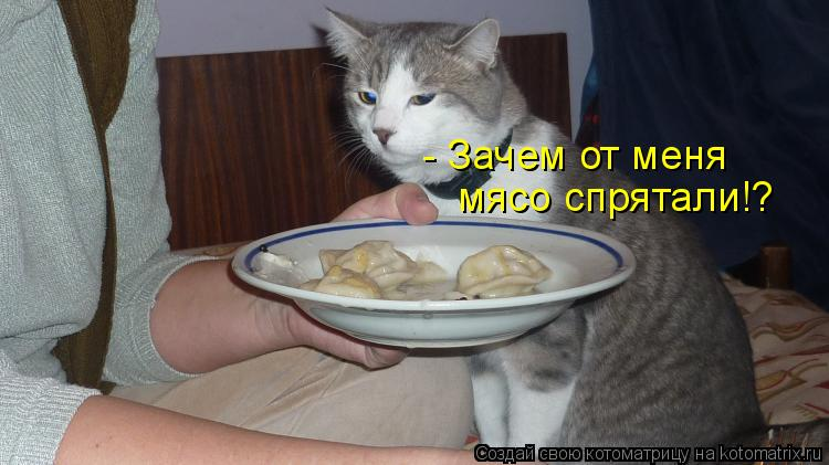 Котоматрица: - Зачем от меня  мясо спрятали!?