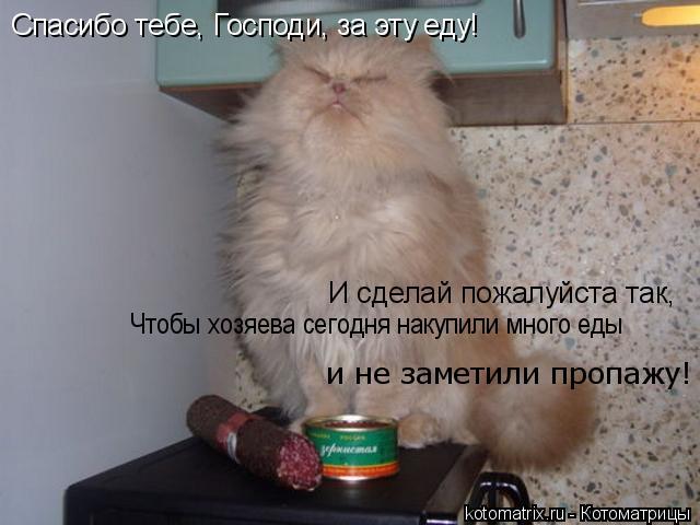 Котоматрица: Спасибо тебе, Господи, за эту еду! И сделай пожалуйста так, И сделай пожалуйста так, Чтобы хозяева сегодня накупили много еды  и не заметили п