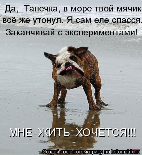Котоматрица: Да,  Танечка, в море твой мячик  всё же утонул. Я сам еле спасся. Заканчивай с экспериментами! МНЕ  ЖИТЬ  ХОЧЕТСЯ!!!