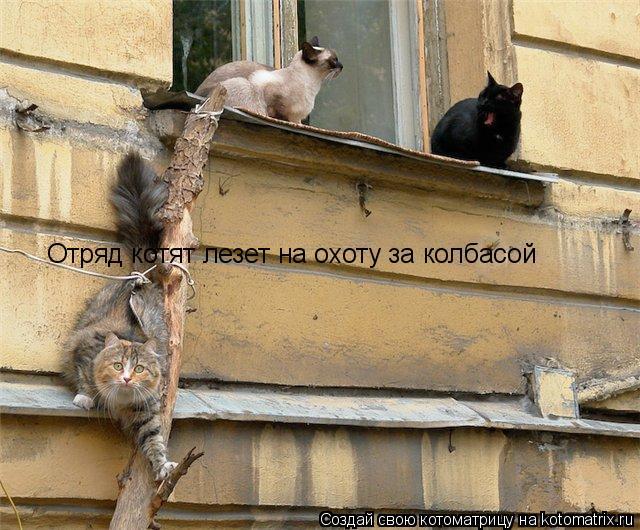 Котоматрица: Отряд котят лезет на охоту за колбасой