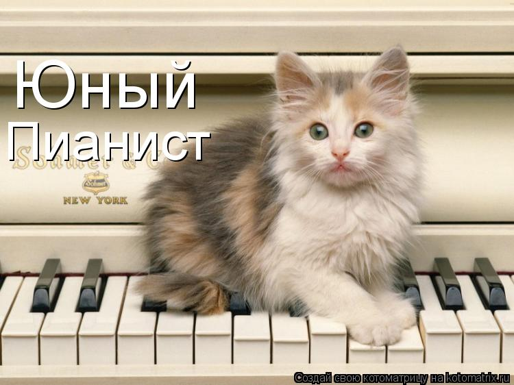 Котоматрица: Юный Пианист