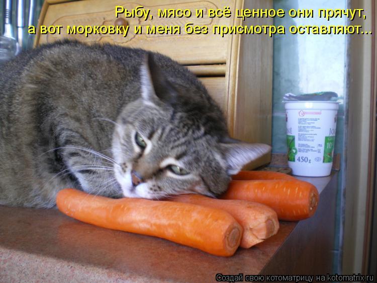 Котоматрица: Рыбу, мясо и всё ценное они прячут, а вот морковку и меня без присмотра оставляют...