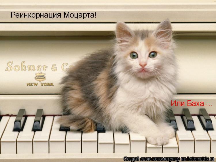 Котоматрица: Реинкорнация Моцарта! Или Баха....